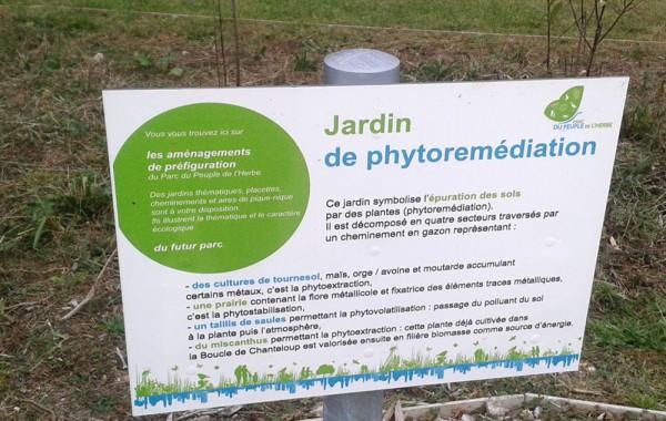 Phytoremediation dépollution